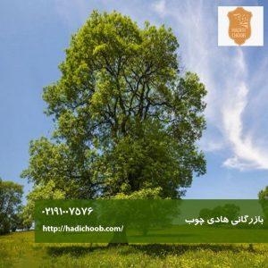 درخت زبان گنجشک
