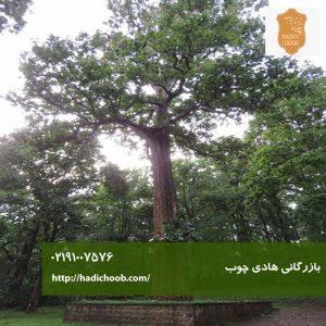 درخت ساج