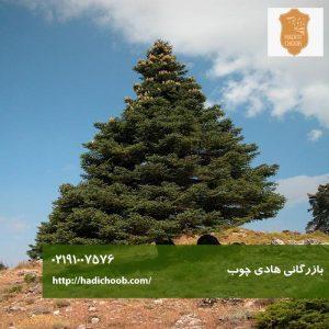 درخت نراد