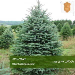 درخت شوکران